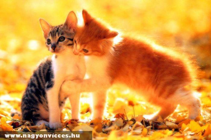 Édes cicák