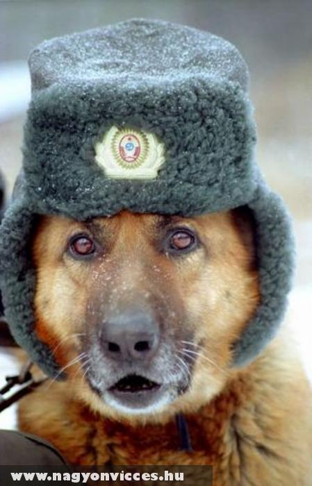 A kutyák is fáznak