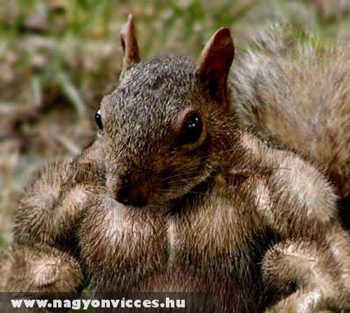 Izmos mókus