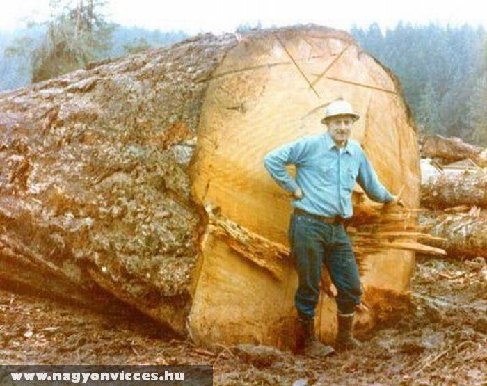 Méretes fa