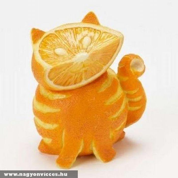 Macska narancsból