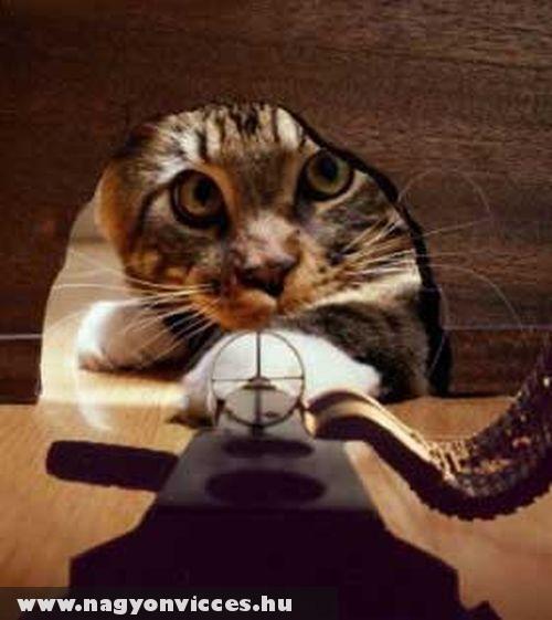 Macska célkeresztben