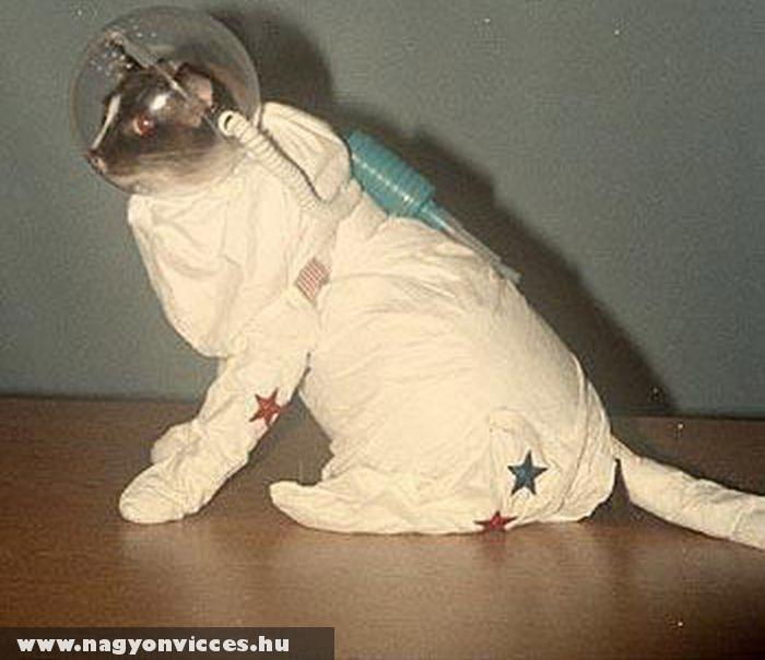 Macska az ûrbe készül