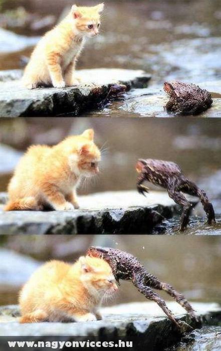 Félõs macska