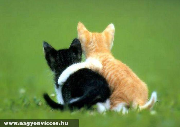 Macska barátok