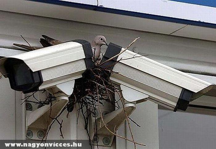 Térfigyelõ madár
