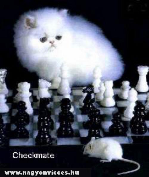 Macska-egér játék