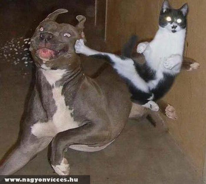 Kutya-macska harc