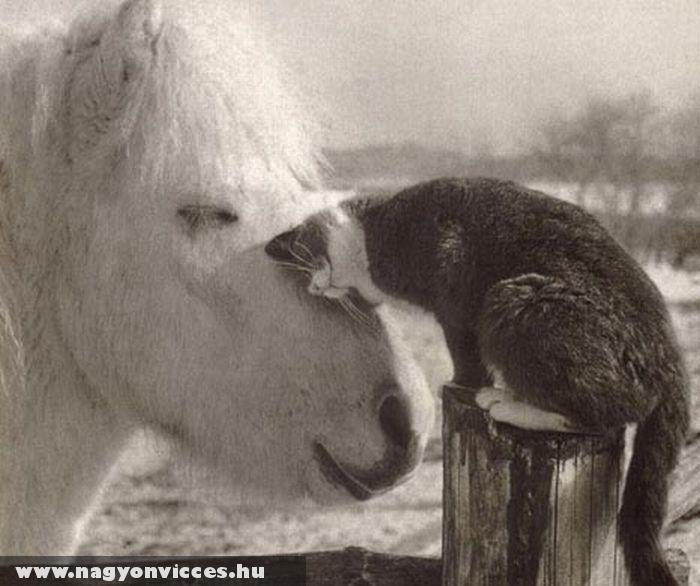 Macska-lovacska szerelem