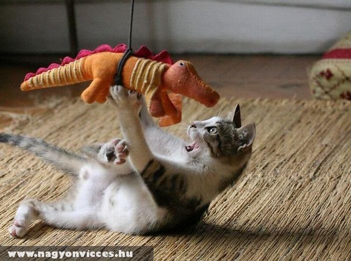 Játékos cica