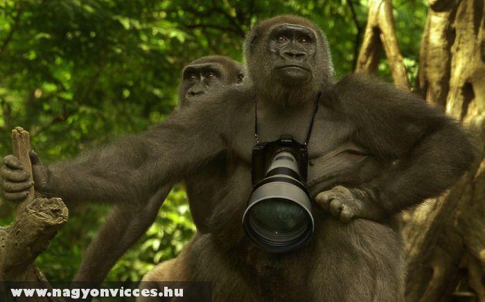 Természet fotós