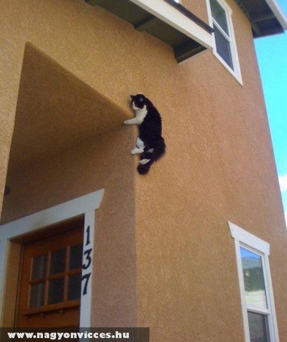 Macska a falon