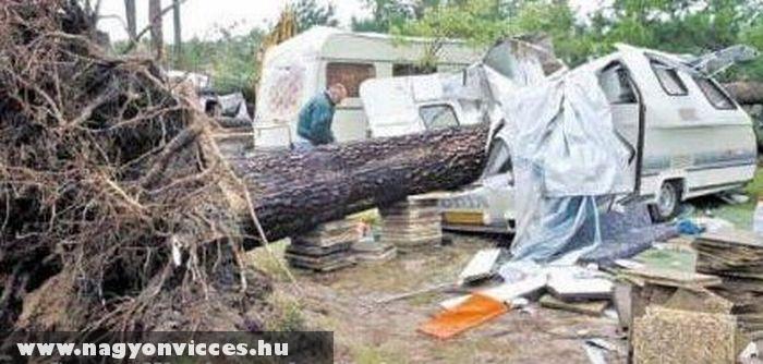 Rossz helyre dõlt a fa