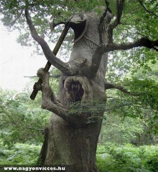 Veszélyes fa