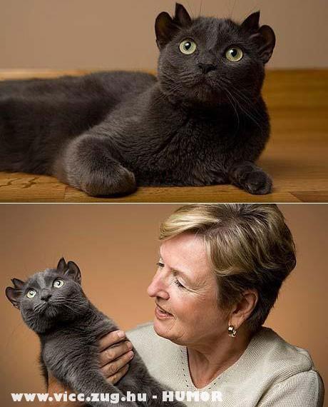 a négyfülû macsek