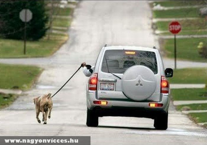 Kutyaséta autóval