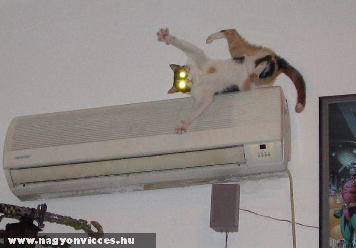 Éppen lezuhanó macska