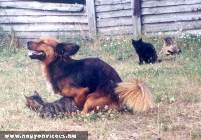 Kutya-macska szex