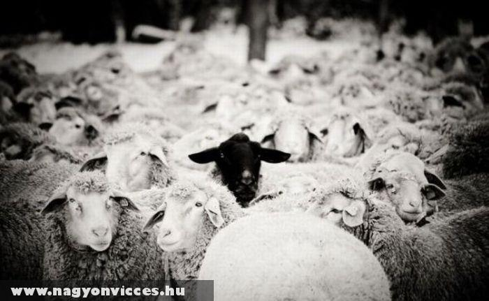 Fekete bárány :)