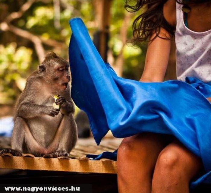 Kíváncsi majom
