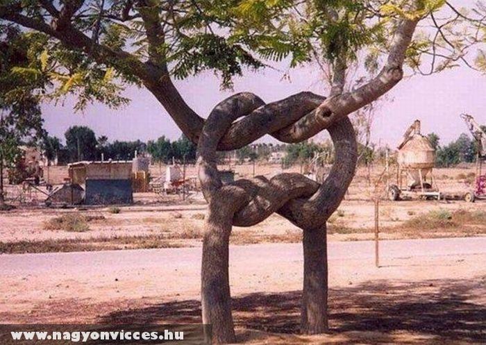 Összenõtt fák