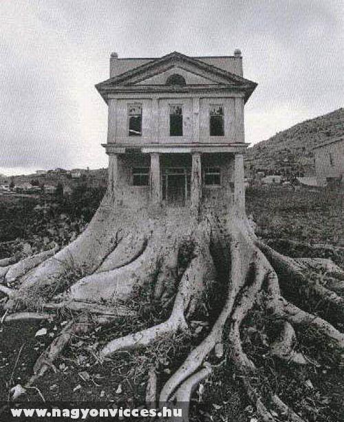Gyökérlábon forgó ház