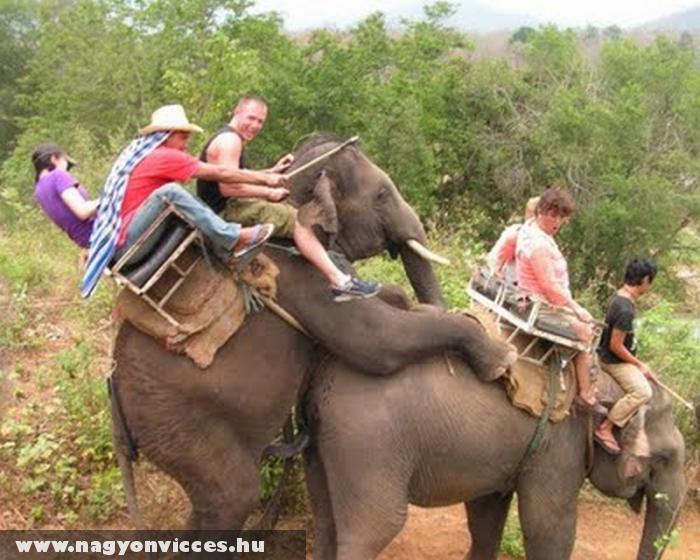 Beakasztott az elefánt a szafari elefántlánynak