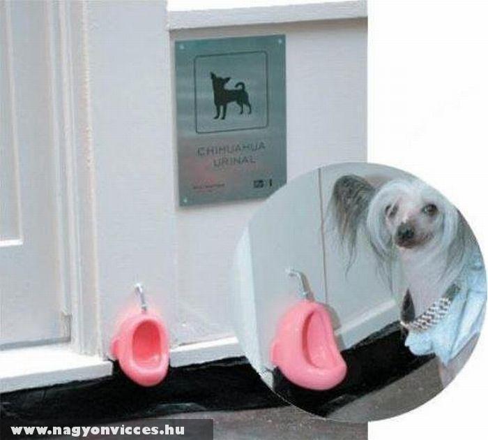 Kutya piszoár