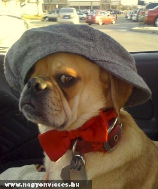 Sapkás kutyó