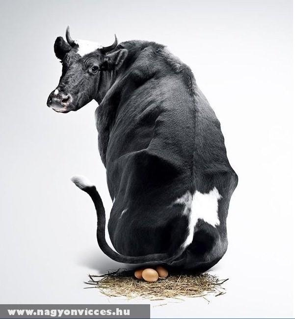 Jövõ Húsvétkor a Milka tehén hozza a tojást