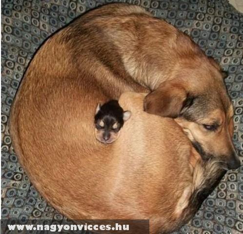 Kutya és a kotlóseffektus