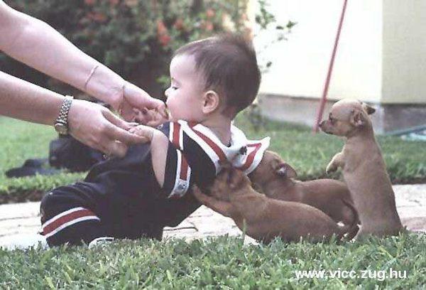 Kutyatár