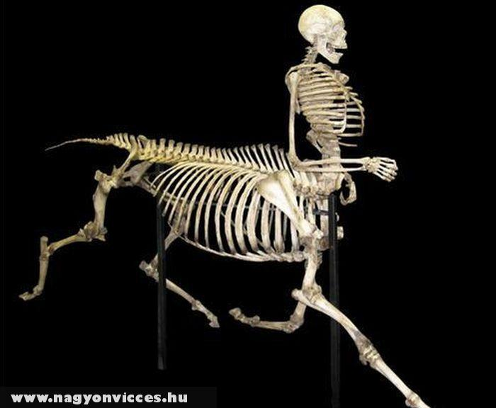 Kentaur csontváz