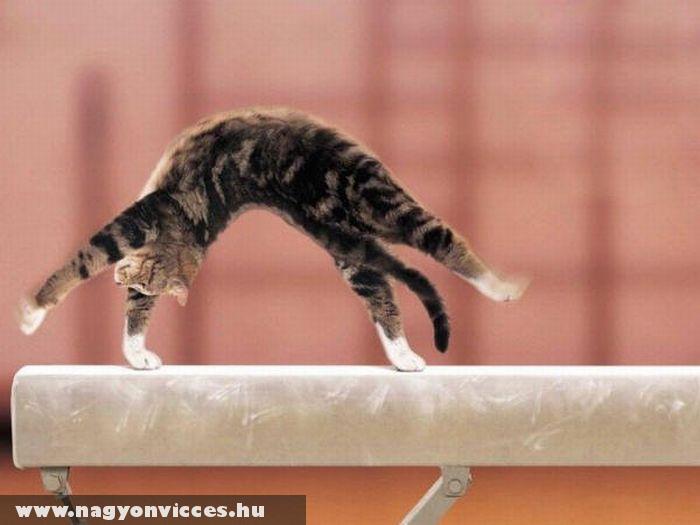 Szertornász macska