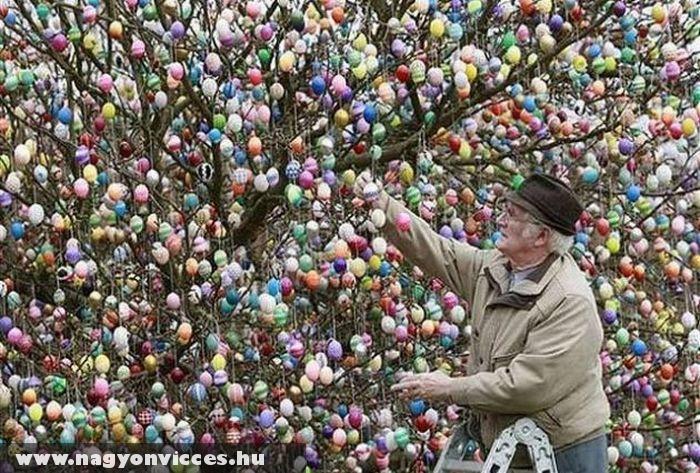 Hímes tojás fa
