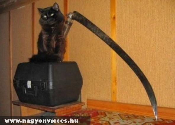 A halál macskája