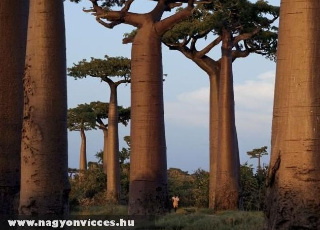 Fák és ember
