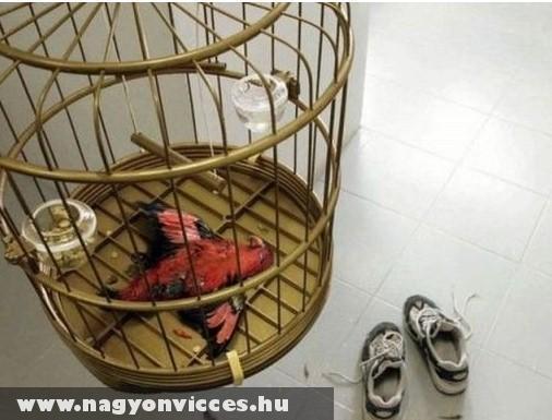 Kínai sportcipõ