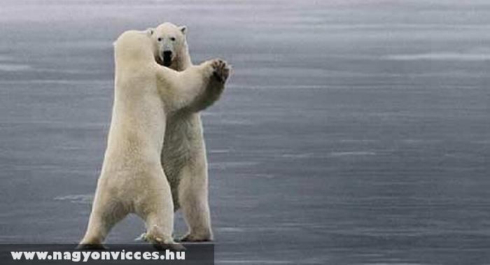 Táncoló jegesmedvék