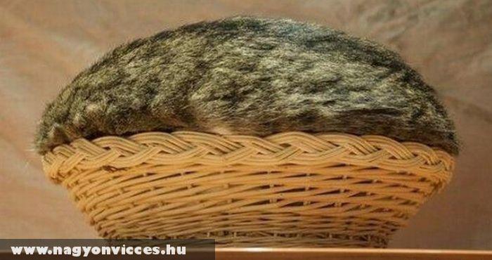 Macska pite