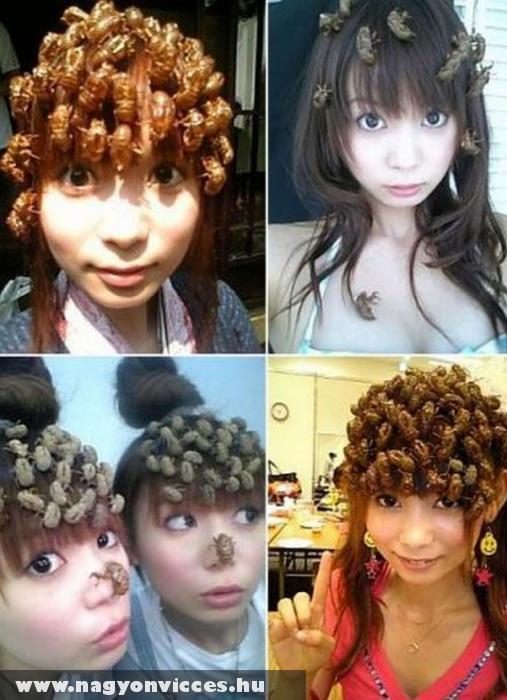 Bogaras japánok