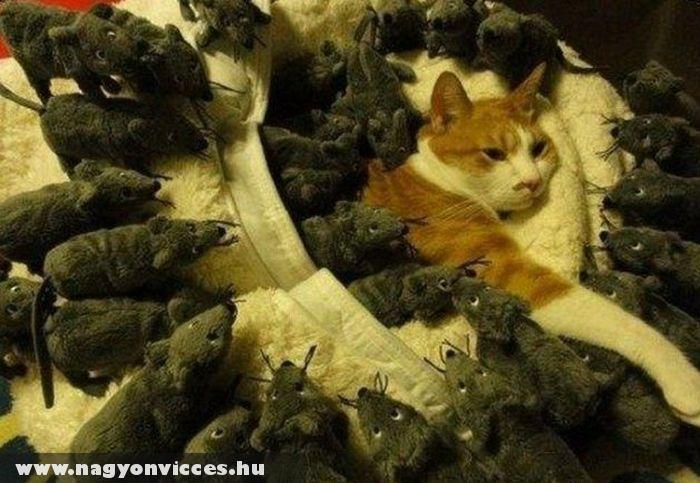 A macskák rémálma