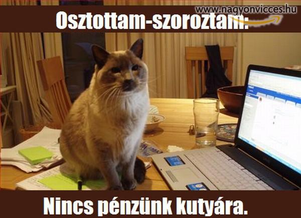A macska racionális gondolataiból :)