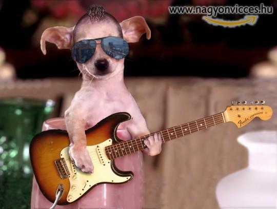 Dog guitar