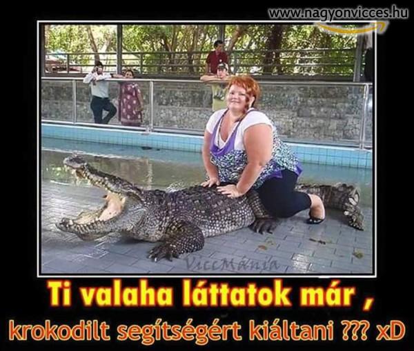 Krokodíl kiált segítségért