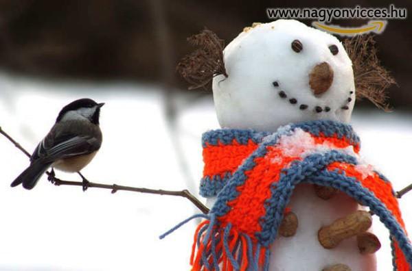 Madáretető hóember
