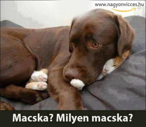 Milyen macska?