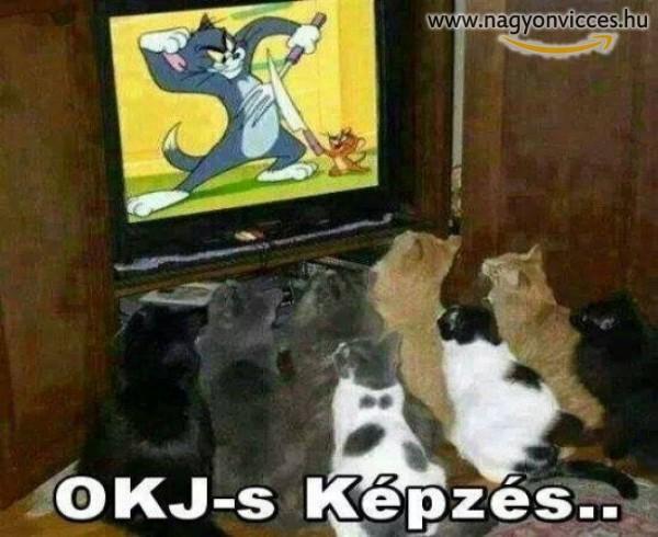 OkJ-s képzés macskáknak