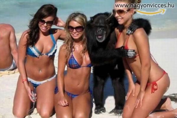 Szerencsés majom :)