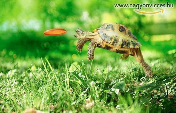 Teknős frizbi :D